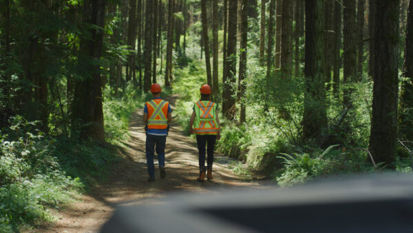 sustainably managed forests require workers to monitor forests